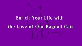 Quote - Ragdoll Cat Breeder